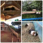 zoo 🐹